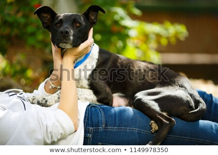 younf woman combing out the fur of a black dog in her garden stock photo © lightpoet