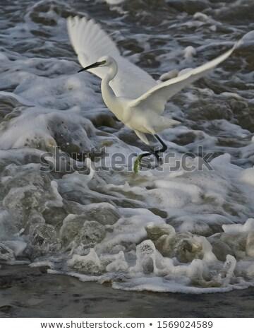 удивленный мало феникс Cartoon иллюстрация птица Сток-фото © cthoman