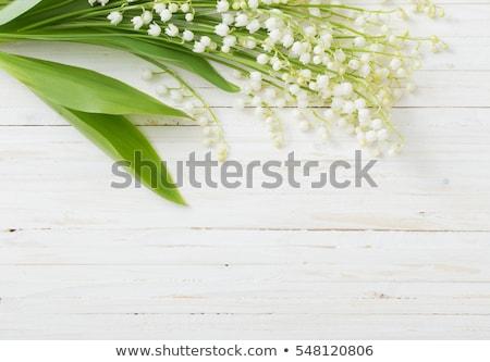 Vallei bloemen groene bokeh voorjaar bos Stockfoto © neirfy