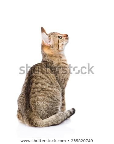 Cute · оранжевый · котенка · большой · Лапы · белый - Сток-фото © feedough