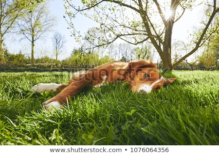 Dog under tree Stock photo © colematt