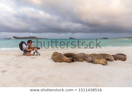 photographer tourist galapagos sea lion in sand on beach on galapagos islands stock photo © maridav