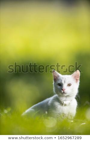 небольшой · котенка · саду · Cute · кошки · дома - Сток-фото © lightpoet