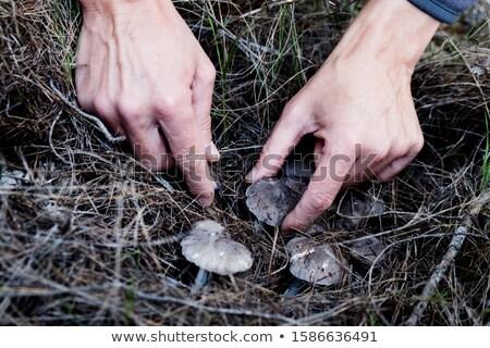 Człowiek szary rycerz grzyby Zdjęcia stock © nito