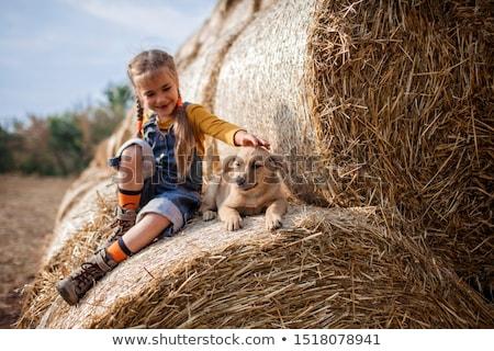 Agricultor naturales dorado campo de trigo hierba Foto stock © ElenaBatkova