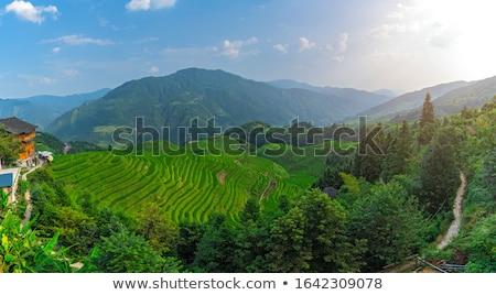 Panorámakép kilátás rizs égbolt étel természet Stock fotó © galitskaya