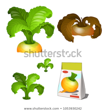 Set of stages of life of a agricultural plant turnip isolated on white background. Paper packaging f Stock photo © Lady-Luck