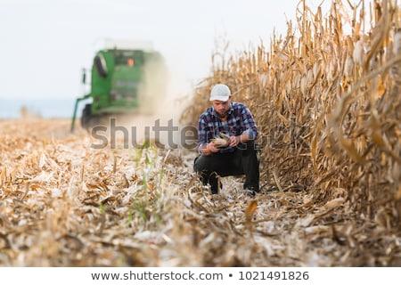 Farmer or agronomist examining corn field Stock photo © simazoran