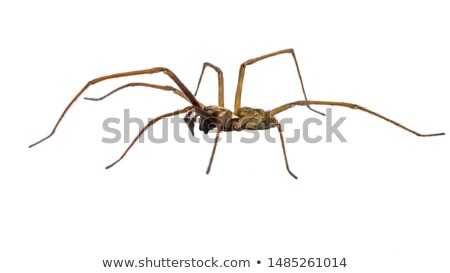 spider in white background stock photo © gewoldi