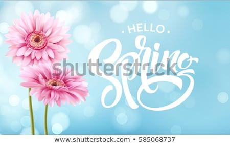 mooie · bloem · abstract · tuin · schoonheid · oranje - stockfoto © dsmsoft