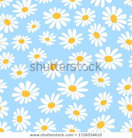Foto stock: Branco · margaridas · blue · sky · nuvens · céu · primavera