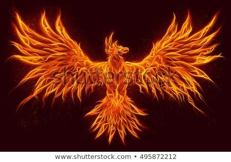 Feniks ptaków słońce świetle projektu czerwony Zdjęcia stock © dagadu