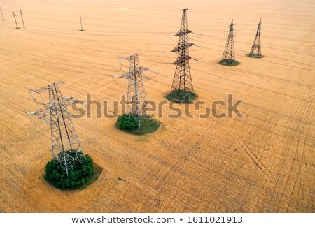 power lines over a wheat field stock photo © spectral