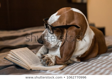 悲しい · 目 · ビッグ · 白 · 犬 · 光 - ストックフォト © markhayes