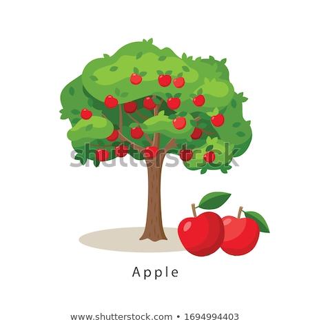 három · piros · almák · fa · rózsás · faág - stock fotó © efischen