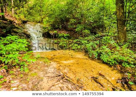美しい サウスカロライナ州 深い 森林 水 青 ストックフォト © alex_grichenko