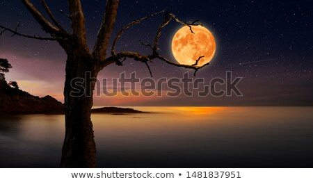 Noche luna árboles fondo montana Foto stock © shihina
