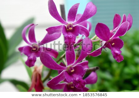beautiful orchid on pink blured background Stock photo © natika
