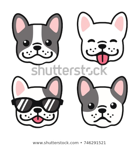 French bulldog face Stock photo © c-foto