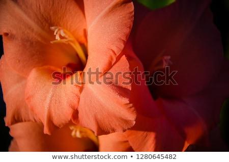 Délkelet-Ázsia · virág · természet · éjszaka · olaj · erotikus - stock fotó © bdspn