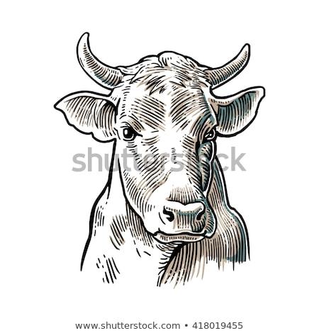 эскиз бык голову Vintage стиль стороны Сток-фото © kali