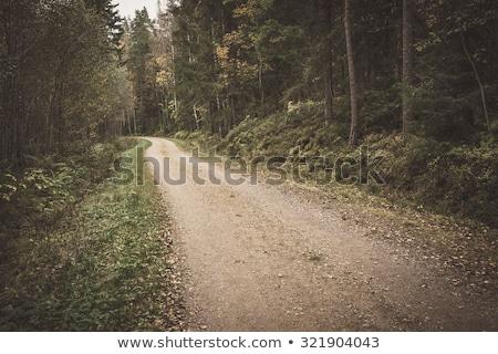 Vidéki kicsi kavicsút Finnország erdő fa Stock fotó © Juhku
