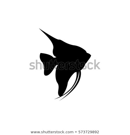 angelfish silhouette Stock photo © Istanbul2009
