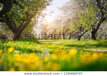 цветы передний план деревья небе дерево домой Сток-фото © artfotoss