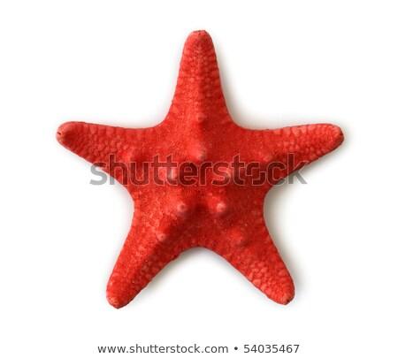 Czerwony Rozgwiazda odizolowany biały zestaw rodziny Zdjęcia stock © Supertrooper