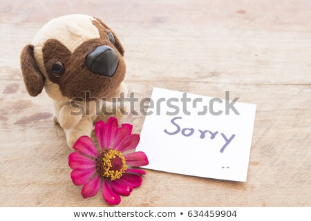 Sorry message and toy Stock photo © fuzzbones0