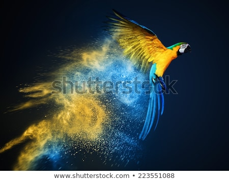 abstract artistic colorful explode stock photo © pathakdesigner