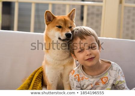 Jongen zoenen hond weinig golden retriever Stockfoto © simply