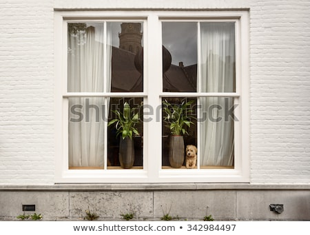 alten fenster haus blumen wand home stock foto oleksandr lysenko oleksandro. Black Bedroom Furniture Sets. Home Design Ideas