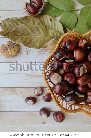 Fuchs Obst Hintergrund Herbst Landwirtschaft Stock foto © M-studio