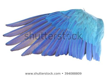 измерение · форма · ангела · птица · крыло · вектора - Сток-фото © andrei_