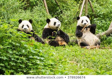 Három állatkert illusztráció természet háttér művészet Stock fotó © bluering