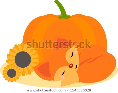 vecteur · cartoon · style · automne · Fox · citrouille - photo stock © curiosity