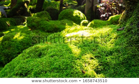 Green Moss A Detailed Background Stock photo © THP