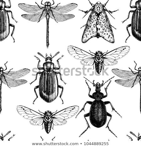 Insekten Set Frühling Stoff Leben Stock foto © lemony