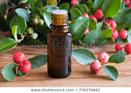 a bottle of wintergreen essential oil with wintergreen twigs stock photo © madeleine_steinbach