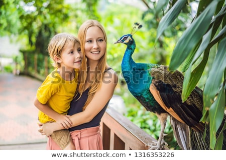 Happy family mom and son watching peacock in the park Stock photo © galitskaya