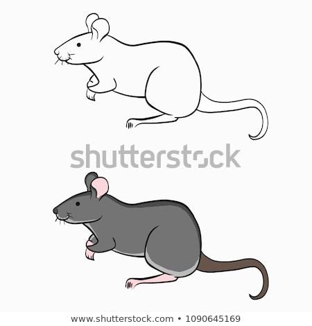 Schets cartoon muis rat geïsoleerd witte Stockfoto © Arkadivna