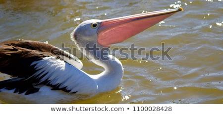 Australiano ver bali pássaro parque água Foto stock © boggy
