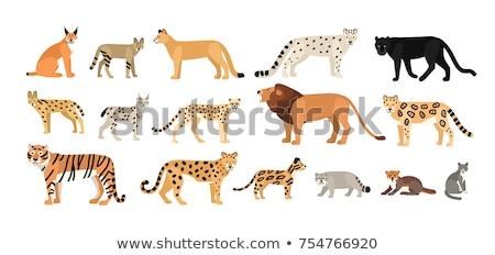 Puma kedi yalıtılmış hayvan karikatür Stok fotoğraf © cienpies