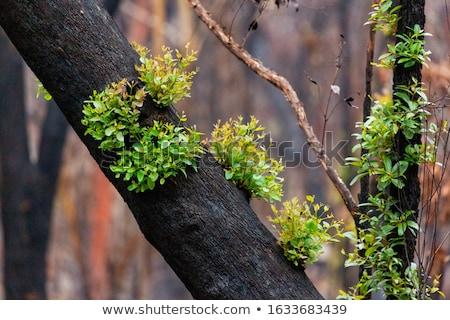 Kék hegyek bokor fa felhők természet Stock fotó © lovleah