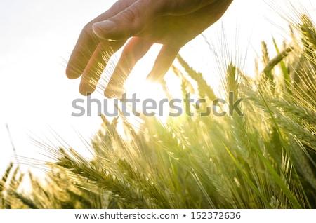 egészséges · étel · mező · ősz · felhők · egészség · kenyér - stock fotó © pressmaster
