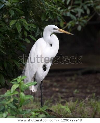 Groot vogels tropische meer schoonheid vogel Stockfoto © luissantos84