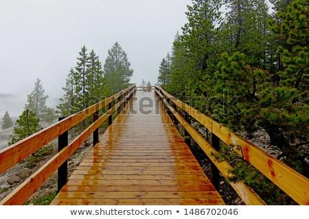 Yellowstone boardwalk Stock photo © fotogal