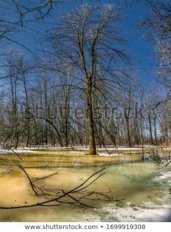 Piscina neve gelo escuro água gelado Foto stock © peterveiler