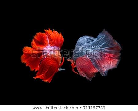 dois · peixe · preto · abstrato · prata · enforcamento - foto stock © peterveiler